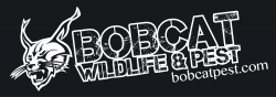 Bobcat Wildlife & Pest Mgmt