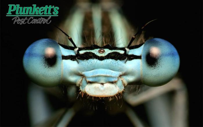 Plunketts Pest Control Joins HireVeterans.com!